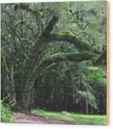 Majestic Fern Covered Oak Wood Print