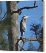 Majestic Great Blue Heron 1 Wood Print
