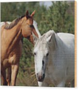 Majestic Horse Ride Wood Print