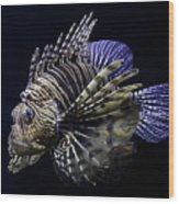 Majestic Lionfish Wood Print