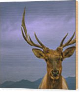 Majestic Elk Wood Print