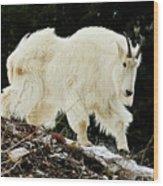 Majestic Mountain Goat Wood Print