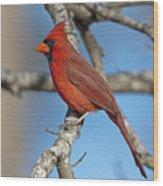 Majestic Mr. Redbird Wood Print