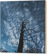 Majestic Nature On Beauty In Death Wood Print