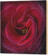 Majestic Rose Wood Print