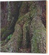 Majestic Tree Trunk Wood Print