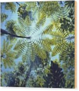 Majestic Treeferns Wood Print