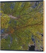 Majestic Trees Abstract Poster 2 Wood Print
