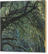 Majestic Weeping Willow Wood Print by Marion McCristall