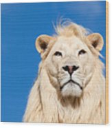 Majestic White Lion Wood Print by Sarah Cheriton-Jones