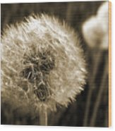 Make-a-wish Dandelion Sepia Wood Print