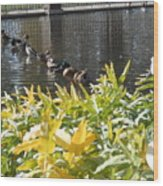 All My Ducks In A Row Wood Print