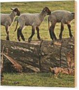 Makeway For Lambs Wood Print