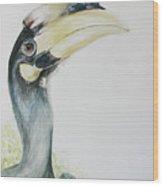Malabar Pied Hornbill -juvenile Bird Wood Print