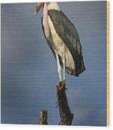 Malabu Stork  Wood Print
