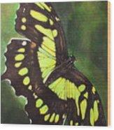 Malacite Wood Print
