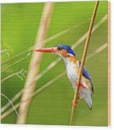 Malachite Kingfisher Wood Print