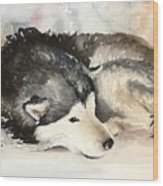 Malamute At Rest Wood Print