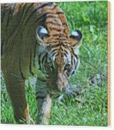 Malayan Tiger # 2 Wood Print