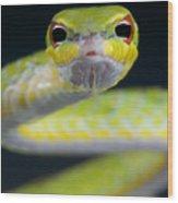 Malayan Vine Snake Wood Print