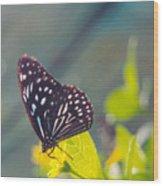 Malaysian Butterfly Wood Print