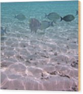 Maldives School Of Tropical Fish Wood Print