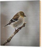 Male American Golden Finch Wood Print