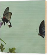 Male And Female Great Mormon Butterflies Hovering Over A Wildflower Wood Print by Sami Sarkis