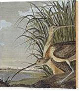Male And Female Long Billed Curlew Wood Print