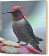Male Anna's Hummingbird On Feeder Perch Wood Print