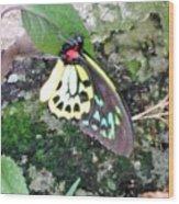 Male Birdwing Butterfly Wood Print