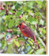 Male Cardinal And His Berry Wood Print