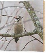 Male Downey Woodpecker Wood Print