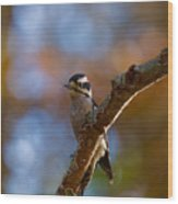 Male Downy Woodpecker Wood Print