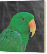 Male Eclectus Wood Print