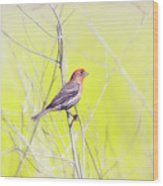 Male Finch On Bare Branch Wood Print