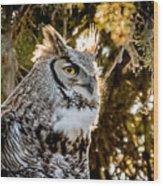 Male Great Horned Owl Portrait Wood Print