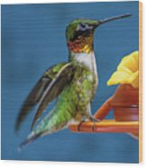 Male Hummingbird Spreading Wings Wood Print