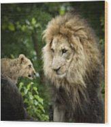 Male Lion And Cub Wood Print