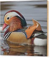 Male Mandarin Duck Wood Print