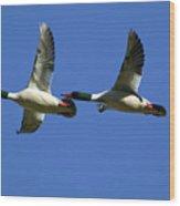 Male Mergansers In Flight Wood Print