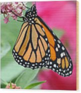 Male Monarch Wood Print by Steve Augustin