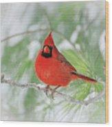 Male Northern Cardinal In Winter - 2 Wood Print