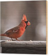 Male Northern Cardinal Winter New Jersey  Wood Print