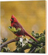 Male Northern Red Cardinal Wood Print