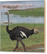 Male Ostrich Wood Print