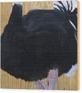 Male Ostrich On Wood Wood Print