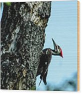 Male Pileated Woodpecker Wood Print