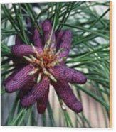 Male Ponderosa Pine Cones Wood Print