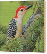 Male Red Bellied Woodpecker In A Tree Wood Print